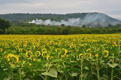 Дым в горе Стоковая Фотография