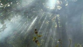 Дым в лесе видеоматериал