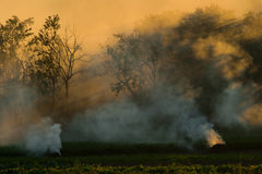 Дым полей в осени Стоковое Изображение RF