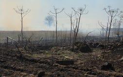 Дым над полем стоковая фотография rf