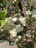 Дыхание весны стоковая фотография