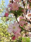 Дыхание весны стоковые фото