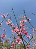 Дыхание весны стоковое фото