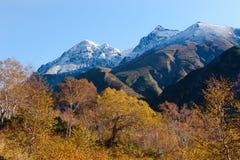 Дыхание зимы Стоковая Фотография RF