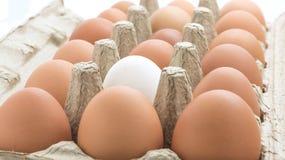 Дюжина яичек цыпленка в коробке Стоковое Фото
