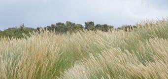 Дюна в ветре Стоковая Фотография