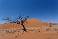 Дюна 45 в sossusvlei Намибии с мертвым деревом Стоковое Фото