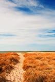 дюна Дании Стоковое Изображение