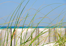 дюна засевает море травой Стоковое Изображение