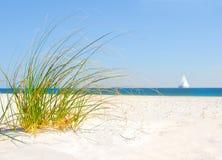 дюна засевает песок травой Стоковые Изображения