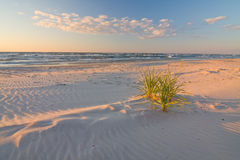 Дюна на пляже на заходе солнца Стоковые Фотографии RF