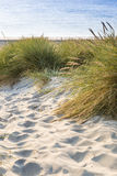 Дюна с зеленой травой Взгляд для пляжа Стоковые Изображения RF