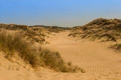 Дюна травы в ландшафте Стоковая Фотография RF