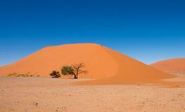 Дюна 45, Sossusvlei, национальный парк Namib-Naukluft Стоковое Фото