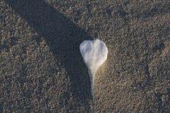 Дюны в зиме на рождестве Стоковое Изображение RF
