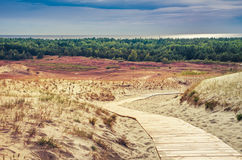 Дюны в Литве Стоковое Изображение