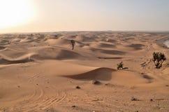 Дюны в пустыне, Дубай Стоковые Фотографии RF
