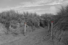Дюны в черноте, белизне и красном цвете Стоковое фото RF