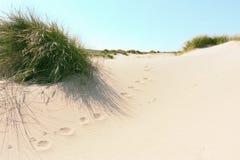 Дюны и трава на пляже Стоковая Фотография RF