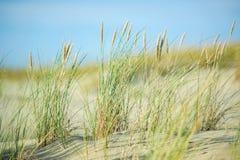 Дюны, песок и трава песка Стоковые Изображения RF