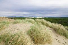 дюны пляжа засевают обозревать травой Орегона стоковое фото