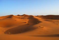 Дюны пустыни Сахара стоковое изображение rf