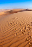 Дюны пустыни Стоковая Фотография