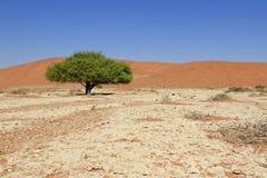дюны пустыни landscape sossusvlei песка nanib Стоковые Изображения