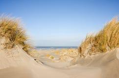 Дюны, трава пляжа, пляж и море Стоковая Фотография RF