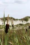 Дюны Schiermonnikoog Стоковая Фотография