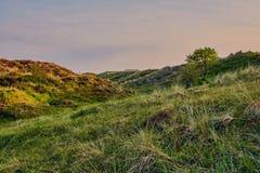 Дюны Schoorl в Нидерландах стоковые изображения rf