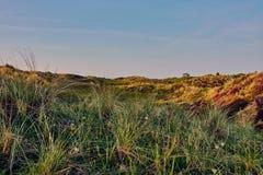 Дюны Schoorl в Нидерландах стоковая фотография