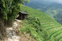 Длинная лачуга точки зрения террасы риса ji стоковое изображение