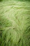 Длинная высокорослая трава после дуновения ветра Стоковая Фотография