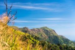 Длинная гора в лесе Стоковое фото RF