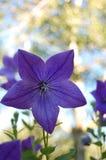 Длинная ожиданная весна Стоковое фото RF