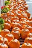 Длинная очередь оранжевых тыкв Стоковые Фото