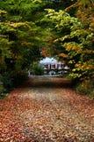 Длинная подъездная дорога с листьями осени Стоковые Изображения RF