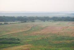 Длинная, сиротливая дорога через поле утра туманное стоковые фото