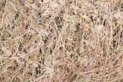 Длинная сухая трава как предпосылка Стоковая Фотография