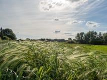 Длинная трава в солнце Стоковое Фото