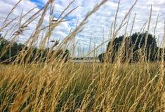 Длинная трава, лиман Стоковые Фотографии RF