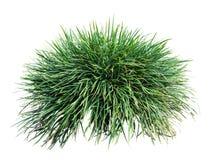 Длинная трава стоковое фото rf