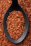 Длинний рис красного цвета зерна Стоковая Фотография RF