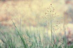 Длинний лужок травы Стоковые Изображения RF