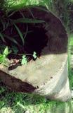 Длинное отверстие журнала кокоса стоковое изображение rf
