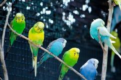Длиннохвостый попугай на ручке Стоковые Фото