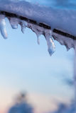 Длинные сосульки вися от ветви Стоковая Фотография RF