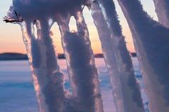 Длинные сосульки вися от ветви Стоковое фото RF