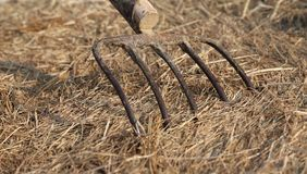 Длинные prongs вилы на сене на ферме Стоковые Изображения RF